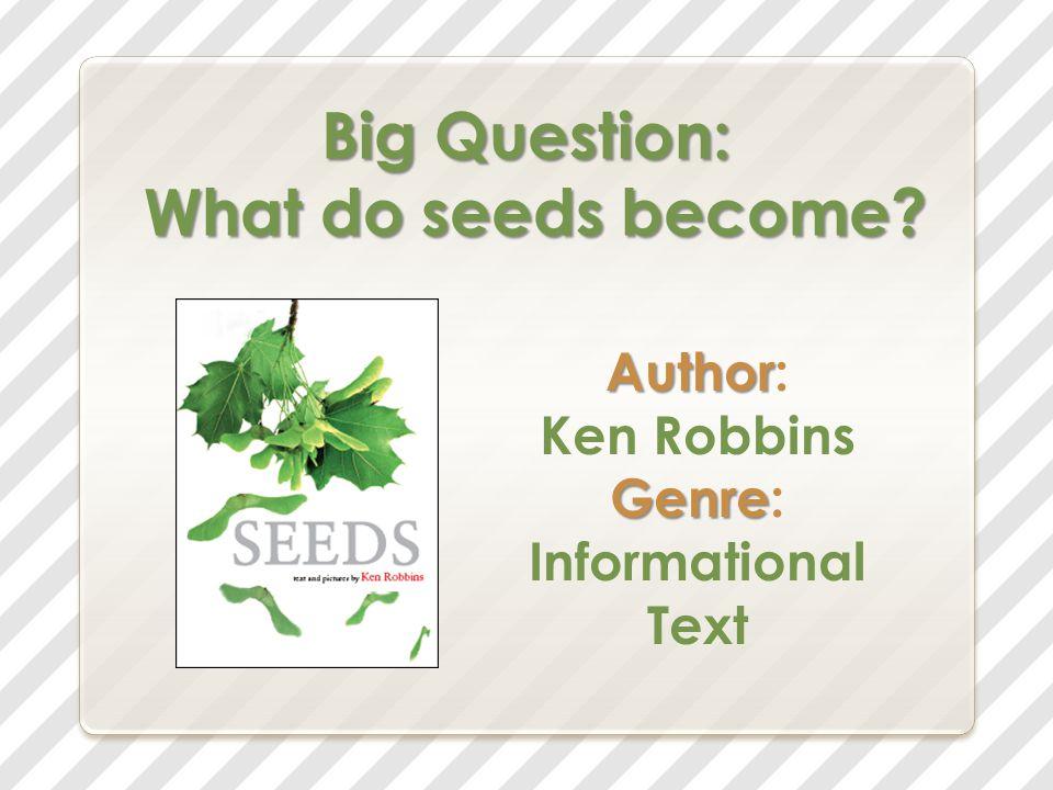 Daisy's Seeds