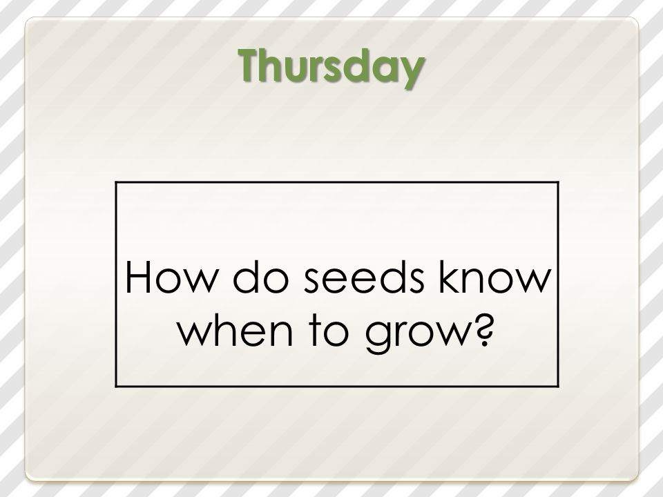 Thursday How do seeds know when to grow?