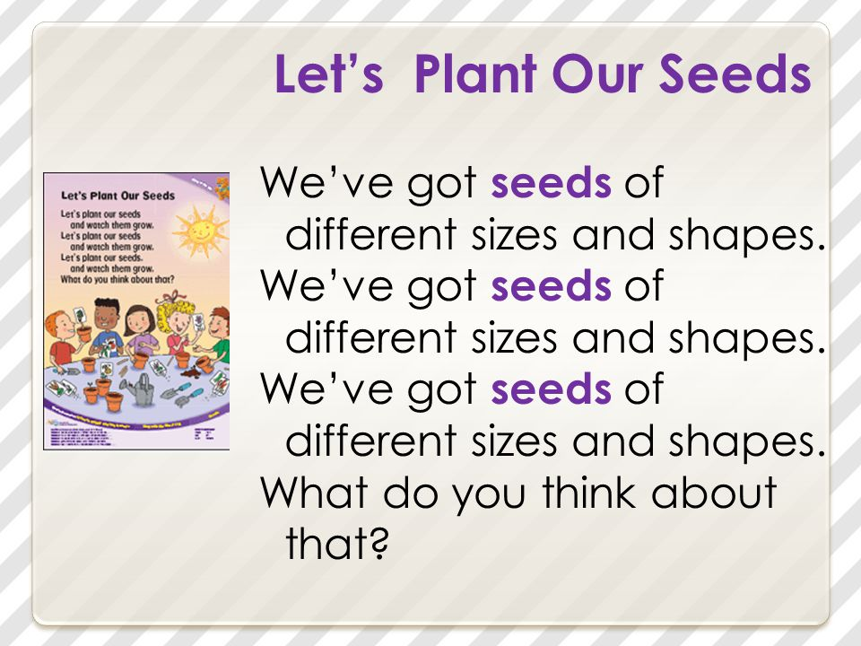 Let's Plant Our Seeds We've got seeds of different sizes and shapes. What do you think about that?