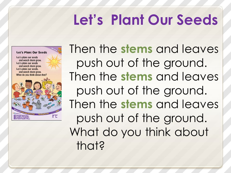 Let's Plant Our Seeds Then the stems and leaves push out of the ground.