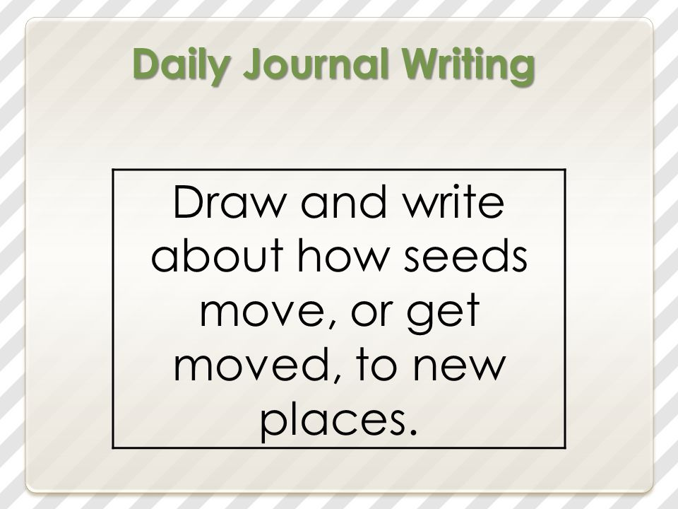 Daily Journal Writing Draw and write about how seeds move, or get moved, to new places.