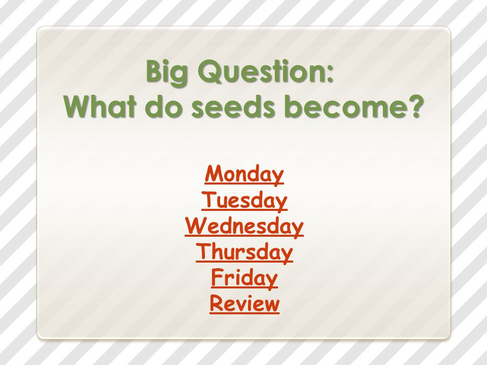 Big Question: What do seeds become? Monday Tuesday Wednesday Thursday Friday Review