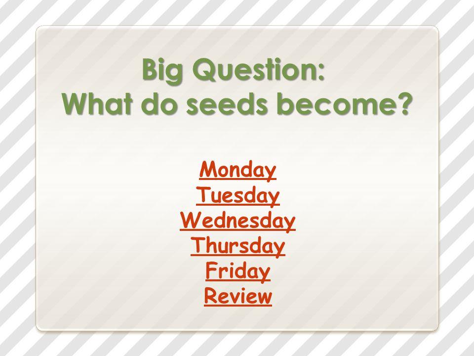 Vocabulary Words tree fruit plant leaves bread grass kernels ripe samaras moisture