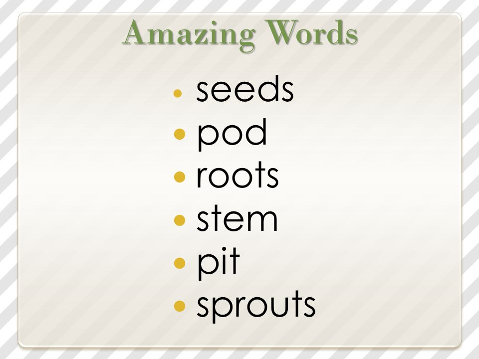 Amazing Words seeds pod roots stem pit sprouts