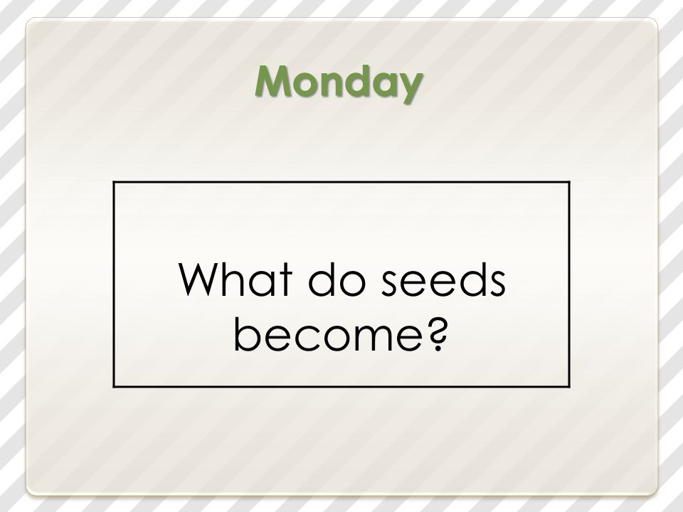 Today we will learn: Build Background Amazing Words Shared Reading: Seeds Vocabulary Words Introduce /o/ High-Frequency Words Decodable Reader 16: In the Kit.