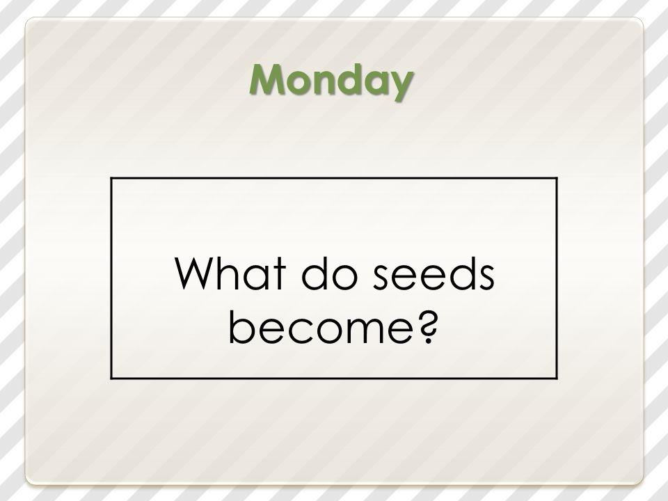 the seeds will not grow The seeds will not grow.