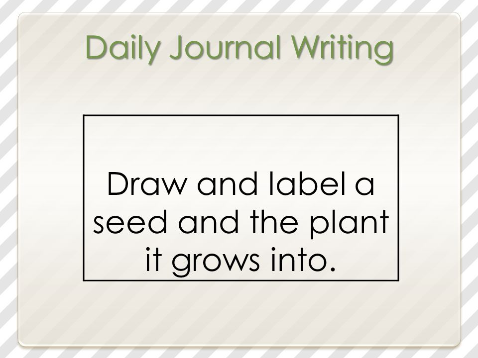 Daily Journal Writing Draw and label a seed and the plant it grows into.