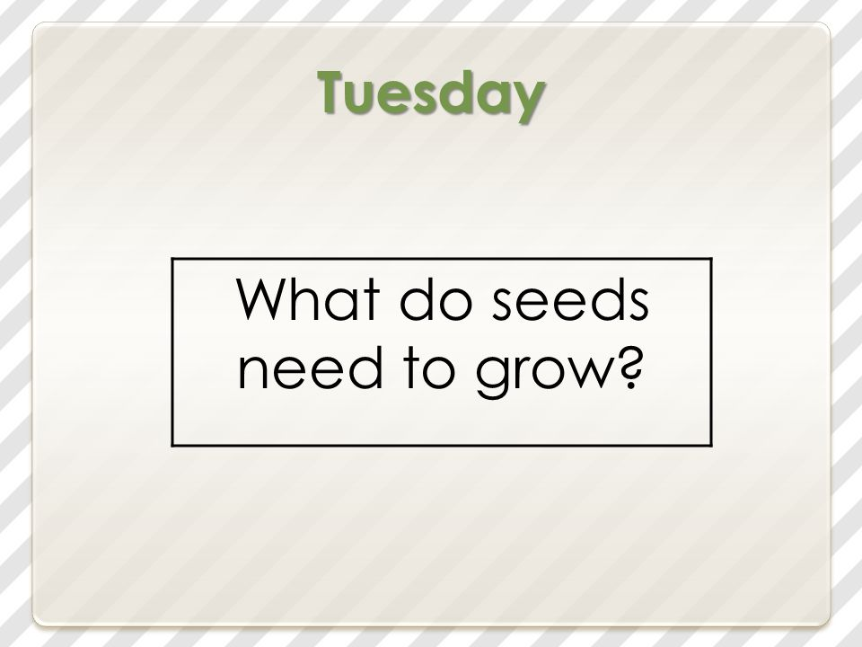 Tuesday What do seeds need to grow?