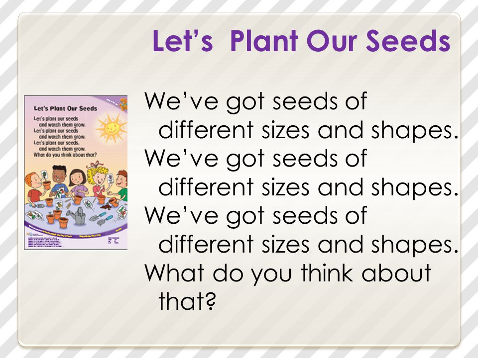 Let's Plant Our Seeds You know, pods and pits and berries are seeds. What do you think about that?