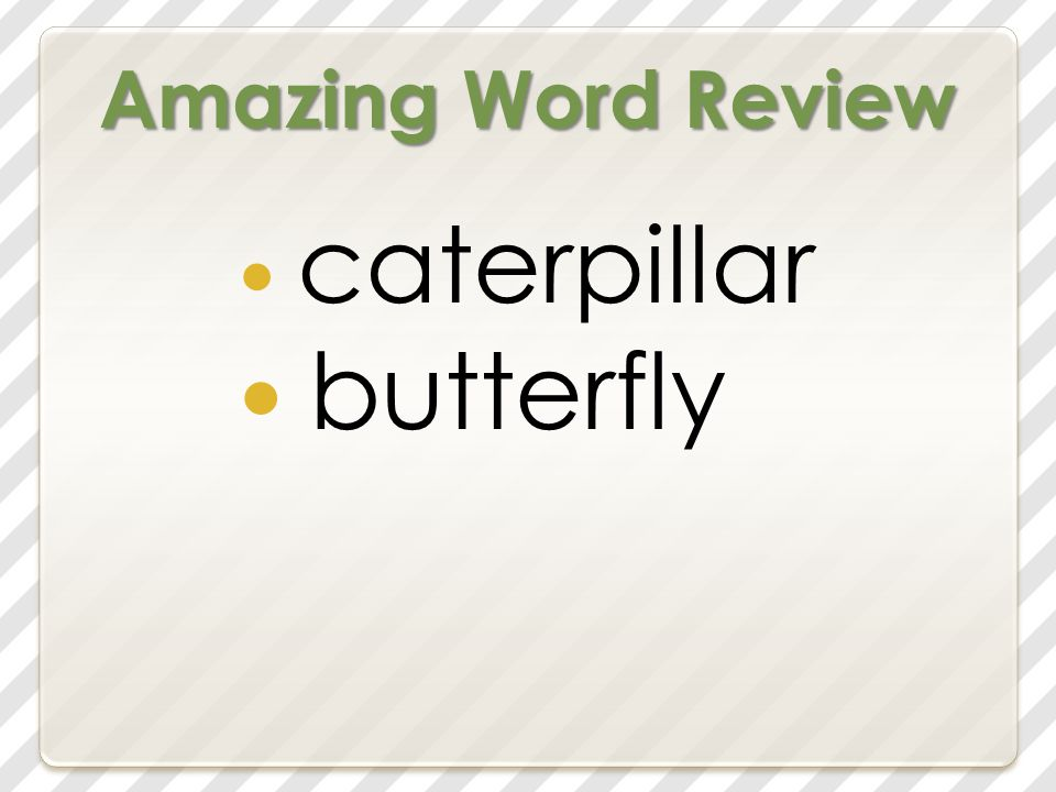 Amazing Word Review caterpillar butterfly