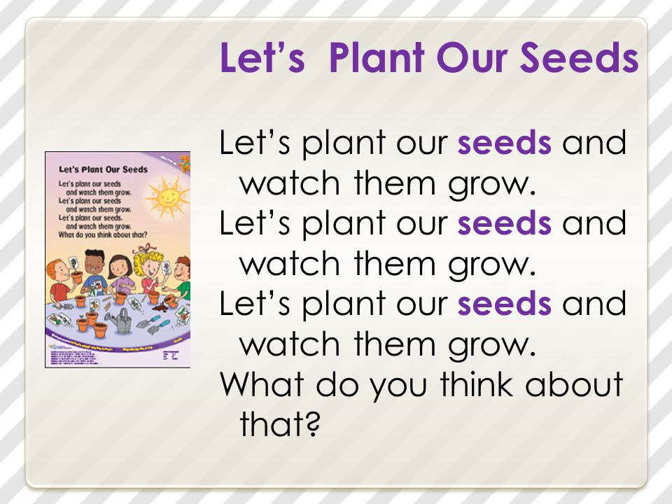Let's Plant Our Seeds Let's plant our seeds and watch them grow. What do you think about that?