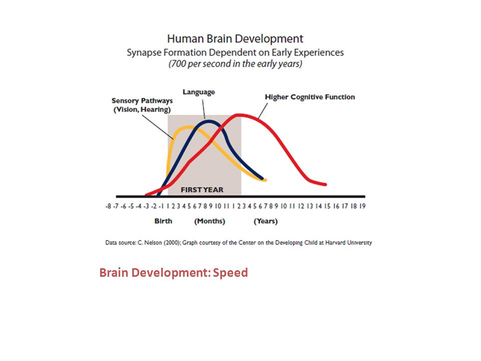 Brain Development: Sensitivity