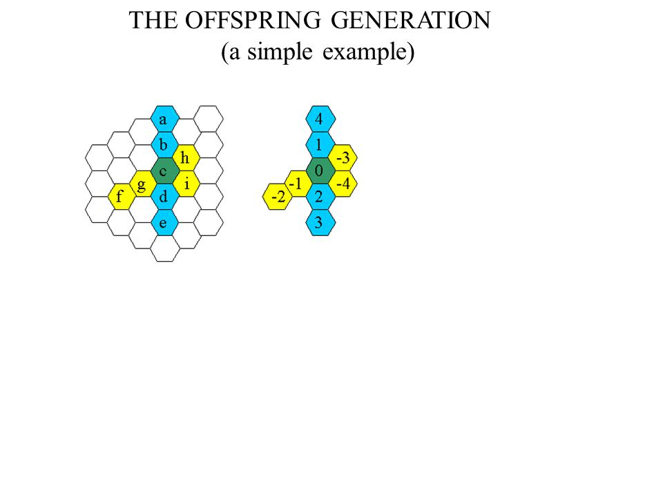 THE OFFSPRING GENERATION (a simple example)