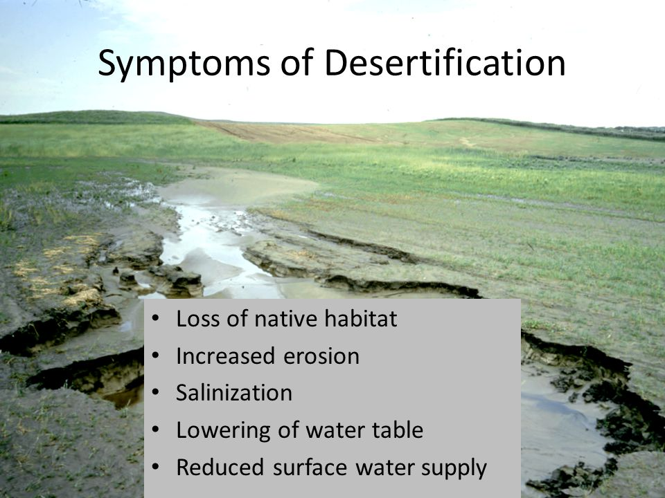 Symptoms of Desertification Loss of native habitat Increased erosion Salinization Lowering of water table Reduced surface water supply