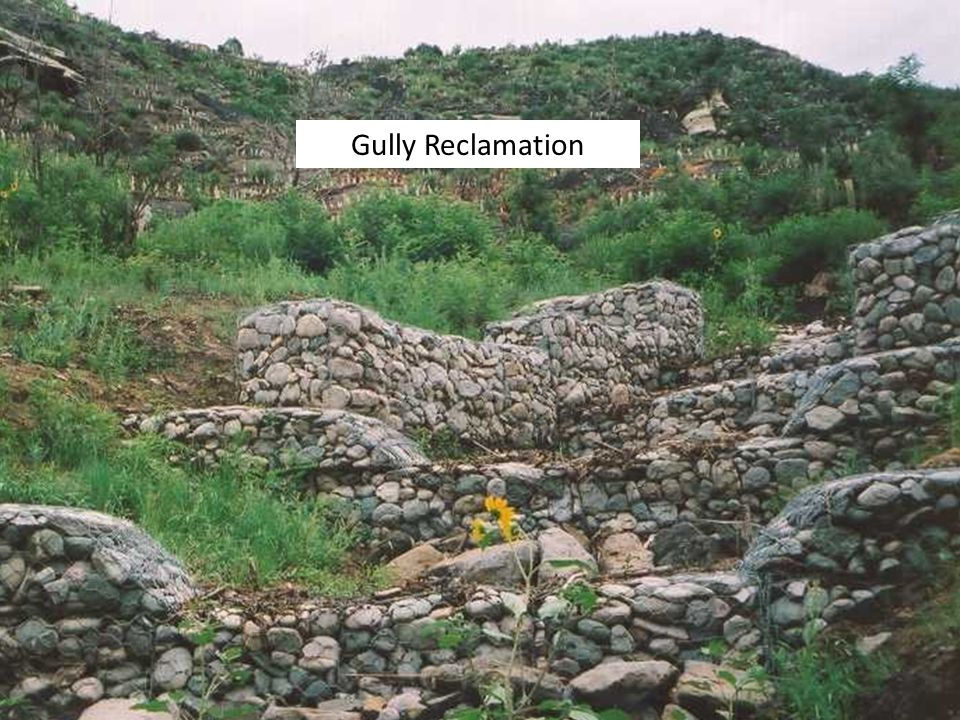 Gully Reclamation