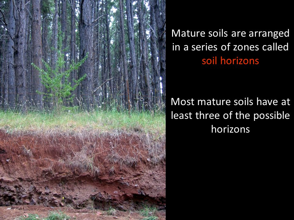 Mature soils are arranged in a series of zones called soil horizons Most mature soils have at least three of the possible horizons