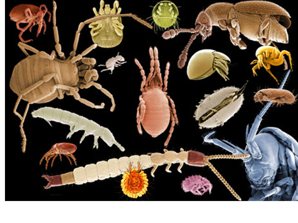 The A and O Horizons is where the interaction with bacteria, fungi, earthworms, and small worms take place