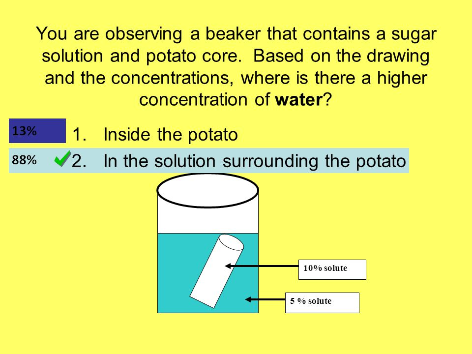 You are observing a beaker that contains a sugar solution and potato core.