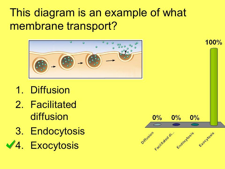 This diagram is an example of what membrane transport.