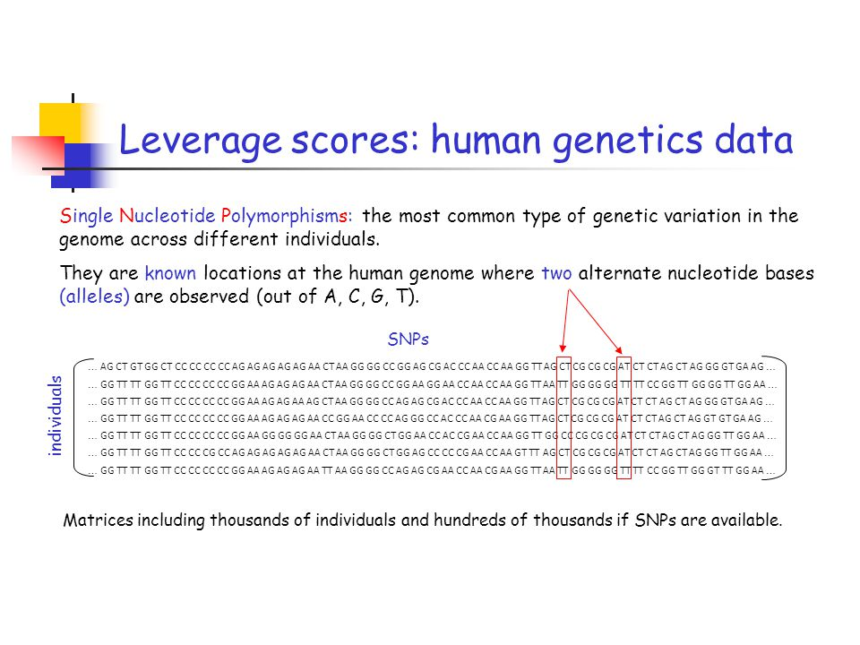 Single Nucleotide Polymorphisms: the most common type of genetic variation in the genome across different individuals. They are known locations at the