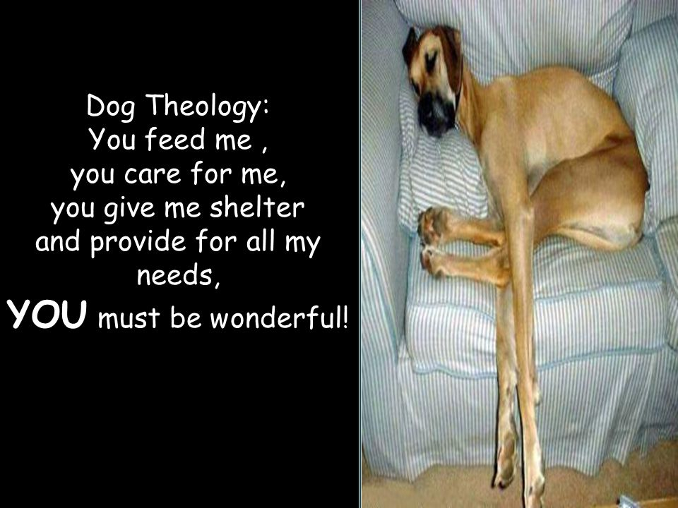 Dog Theology: You feed me, you care for me, you give me shelter and provide for all my needs, YOU must be wonderful!