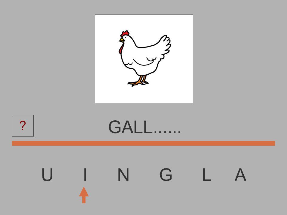 U I N G L A GAL........