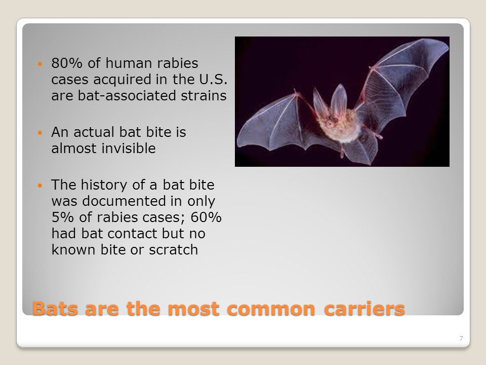 Bats are the most common carriers 80% of human rabies cases acquired in the U.S.