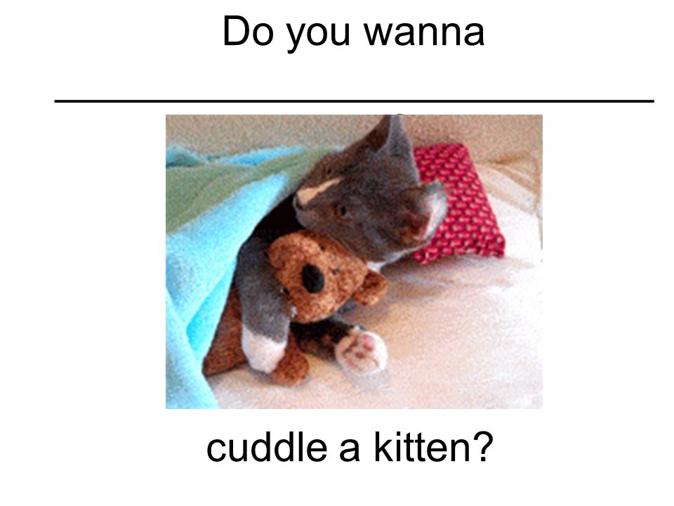 Do you wanna __________________________ ____ cuddle a kitten