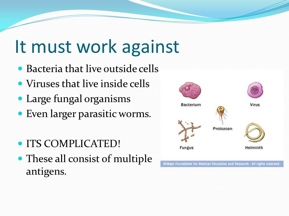 It must work against Bacteria that live outside cells Viruses that live inside cells Large fungal organisms Even larger parasitic worms.