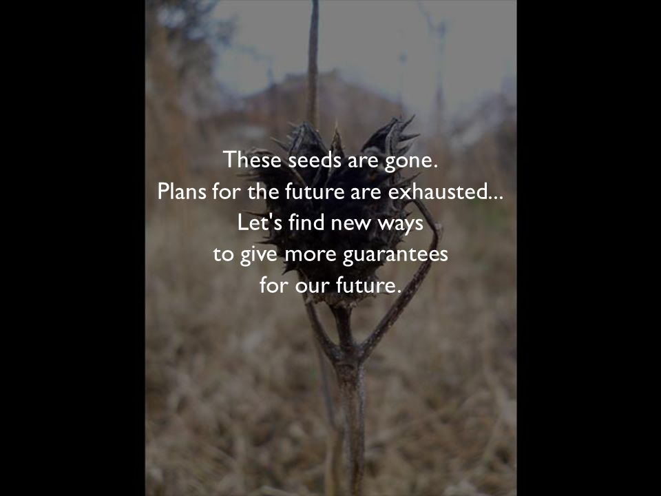 These seeds are gone. Plans for the future are exhausted...