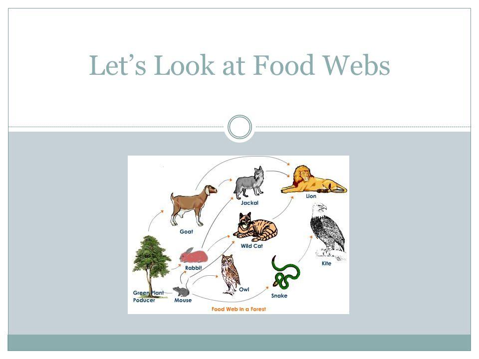 Let's Look at Food Webs