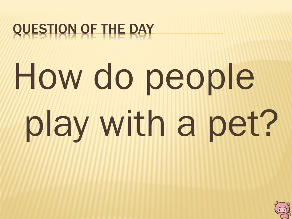 How do people play with a pet?