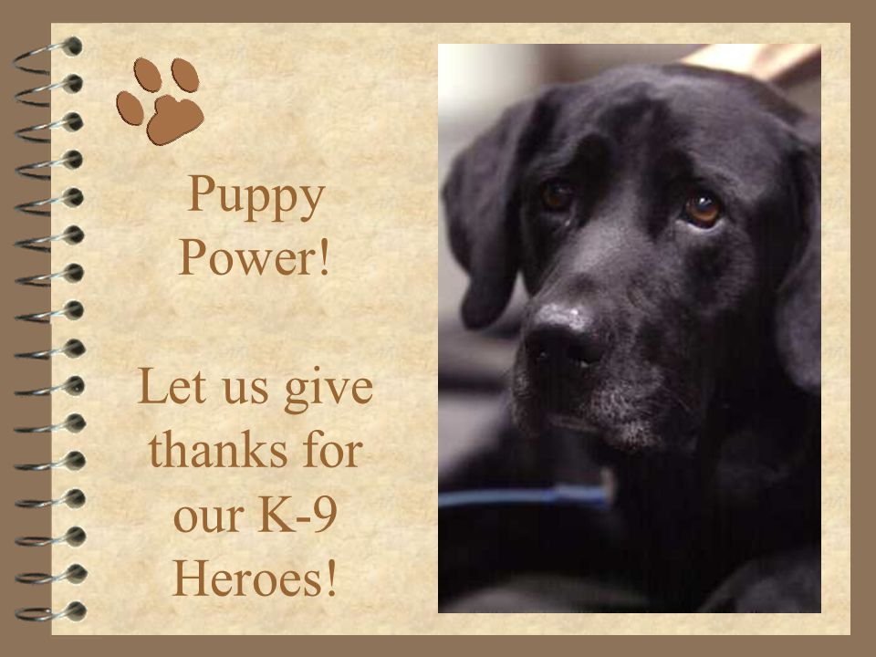 Just as we our proud to be Americans… So our our Nation's Finest K-9 Crusaders… God Bless our four legged friends...