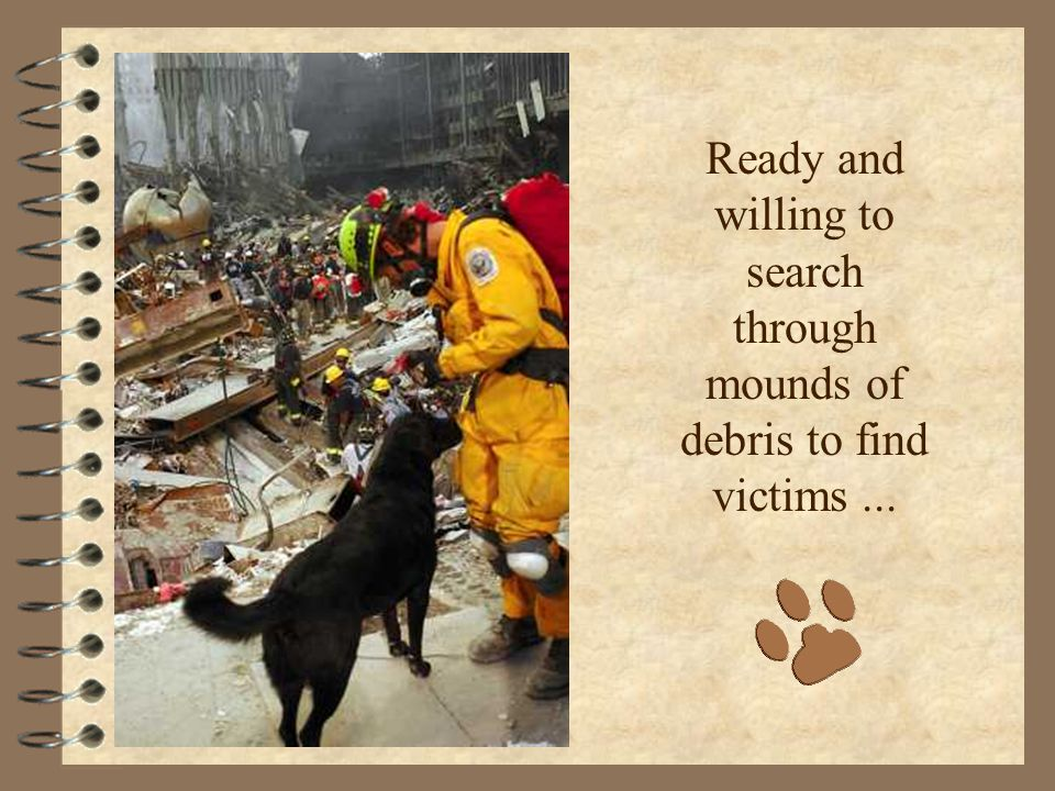 Ready and willing to search through mounds of debris to find victims...