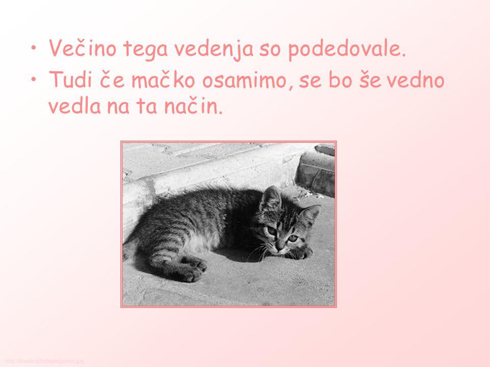 NEGA Mačke so znane po svoji čistosti.