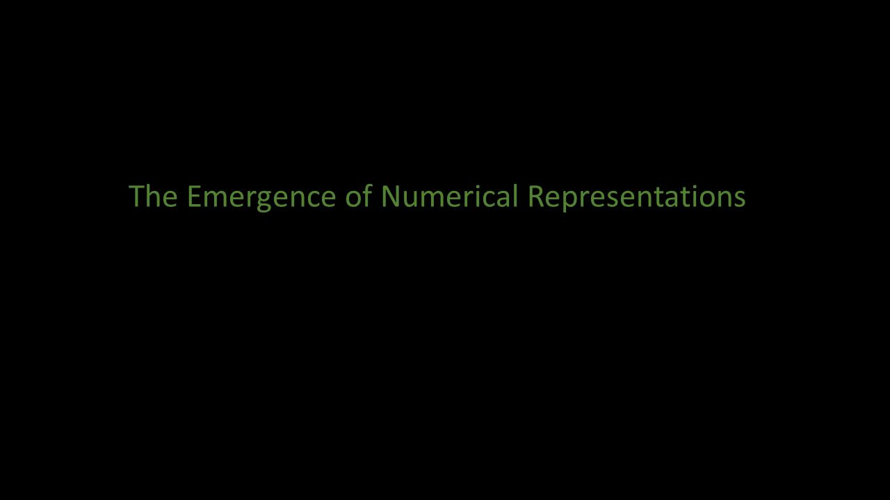 The Emergence of Numerical Representations
