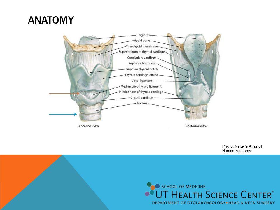 ANATOMY Photo: Netter's Atlas of Human Anatomy