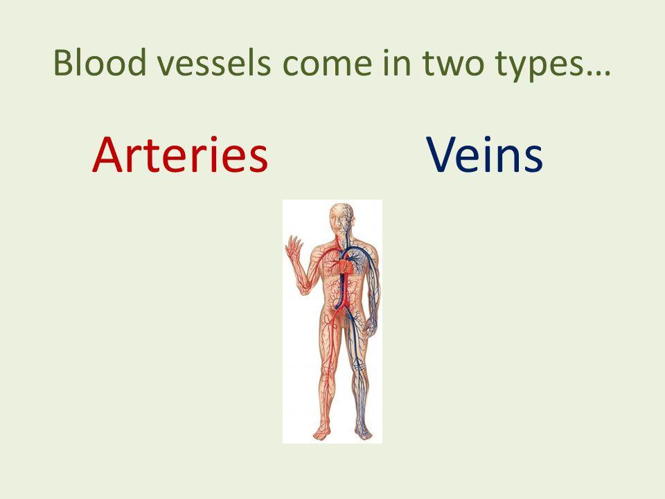 ArteriesVeins