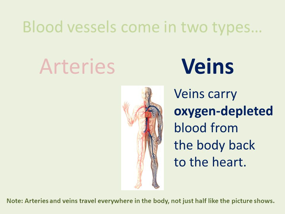 Blood vessels come in two types… ArteriesVeins Veins carry oxygen-depleted blood from the body back to the heart. Note: Arteries and veins travel ever