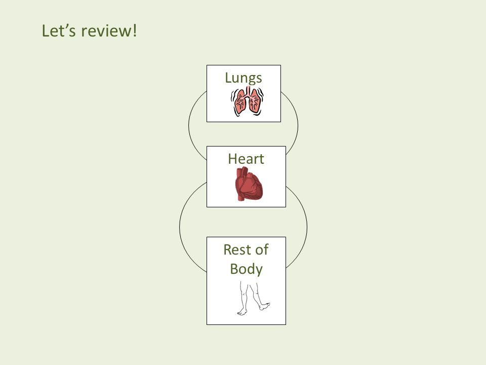 Let's review! Lungs Heart Rest of Body