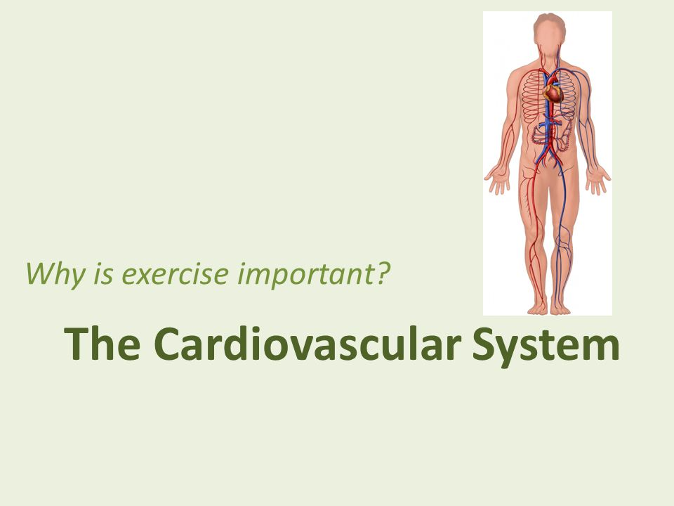 The Cardiovascular System Why is exercise important?