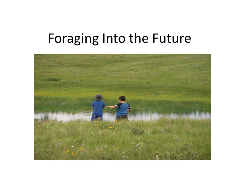 Foraging Into the Future