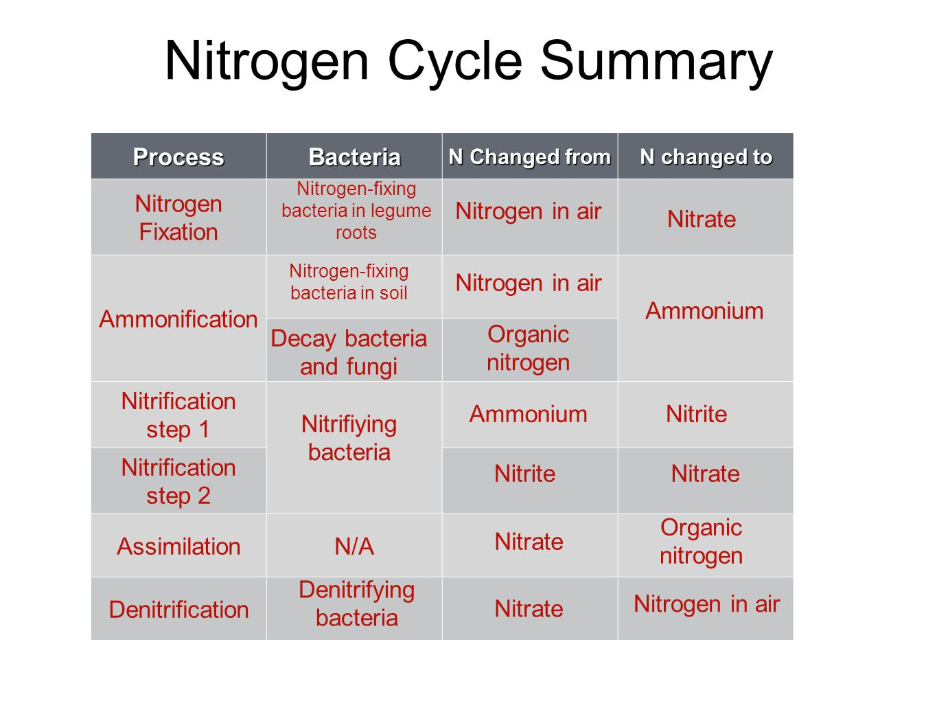 Nitrogen Cycle Summary ProcessBacteria N Changed from N changed to Nitrogen Fixation Ammonification Nitrification step 1 Nitrification step 2 Assimila