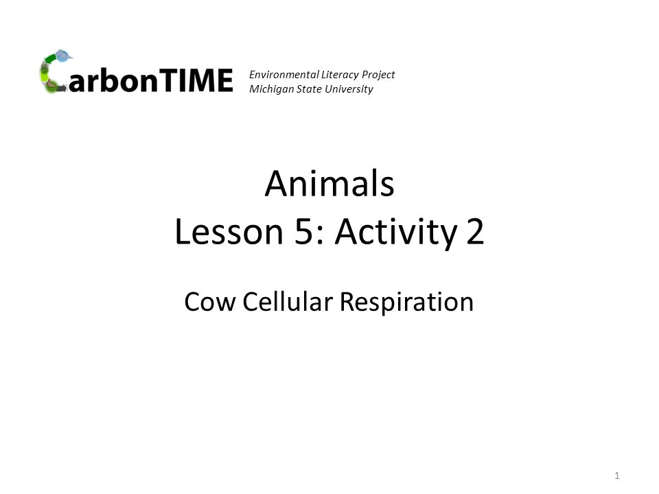 Animals Lesson 5: Activity 2 Cow Cellular Respiration 1 Environmental Literacy Project Michigan State University