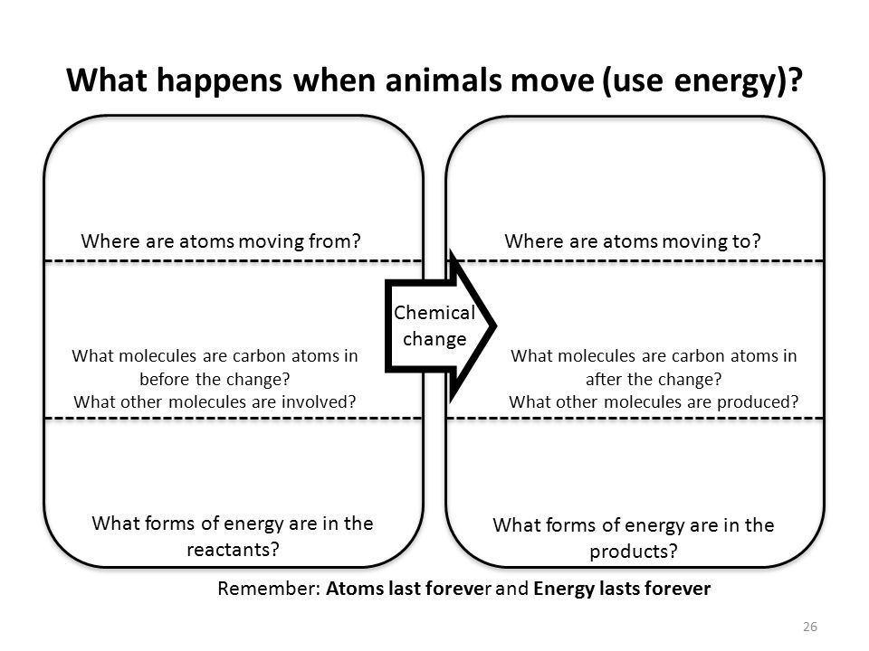 26 What happens when animals move (use energy)? Remember: Atoms last forever and Energy lasts forever What forms of energy are in the reactants? What