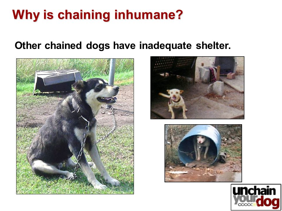 Other chained dogs have inadequate shelter. Why is chaining inhumane