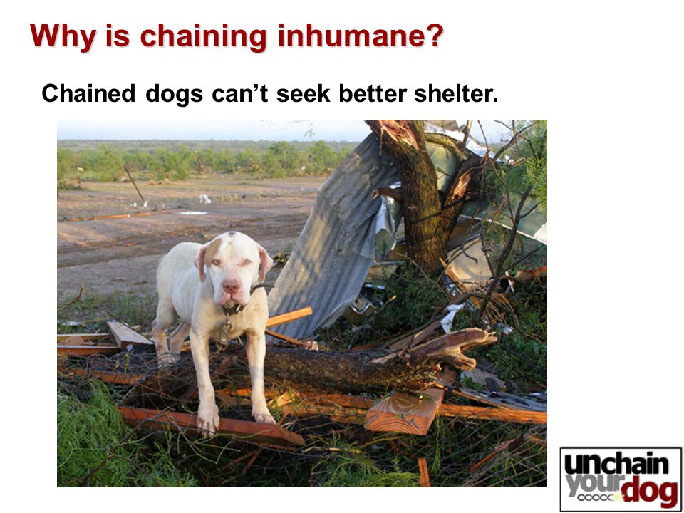 Chained dogs can't seek better shelter. Why is chaining inhumane