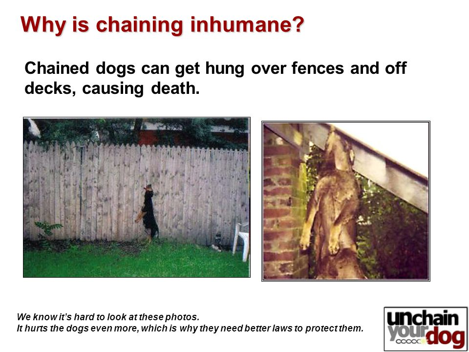 Chained dogs can get hung over fences and off decks, causing death.