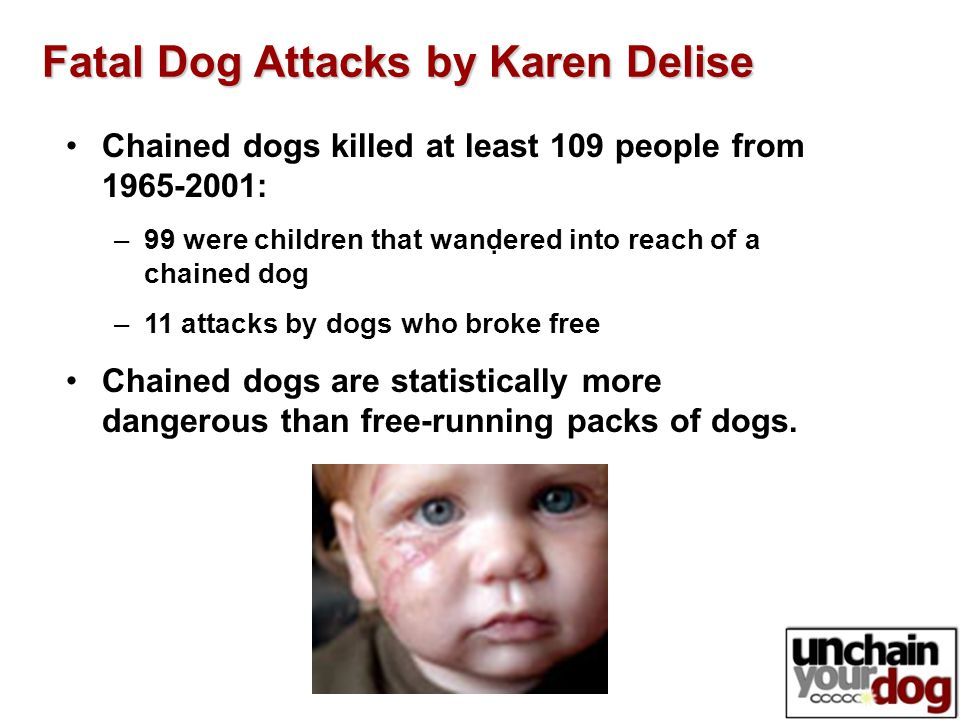 . Fatal Dog Attacks by Karen Delise Chained dogs killed at least 109 people from 1965-2001: –99 were children that wandered into reach of a chained dog –11 attacks by dogs who broke free Chained dogs are statistically more dangerous than free-running packs of dogs.