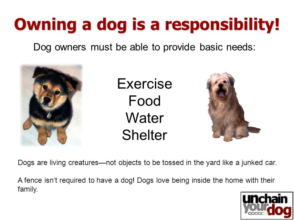 Dog owners must be able to provide basic needs: Owning a dog is a responsibility.